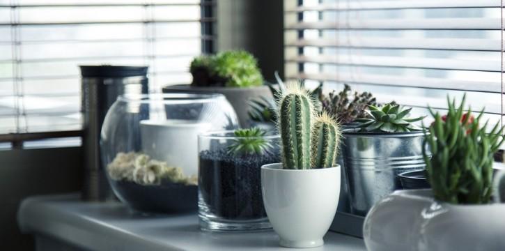 plants-on-window-ledge